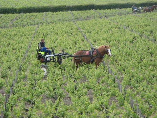Green Wine_Pontet-Canet Winery.jpg
