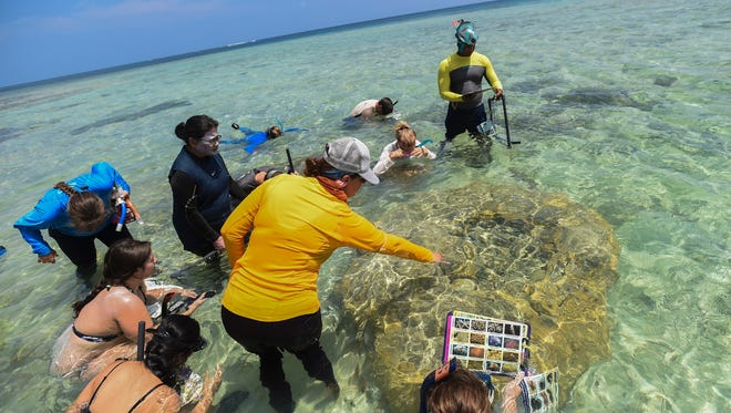 Participants of the Friends of Reef Guam coral reef monitoring training observe a Porites coral at Tepungan Beach Park in Piti on June 23, 2018. See more photos, Page 2.