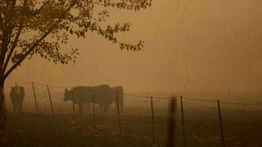 California's air quality board voted today to call for a near-complete ban of agricultural burning by 2025 in the San Joaquin Valley,one of the most polluted regionsin the country.