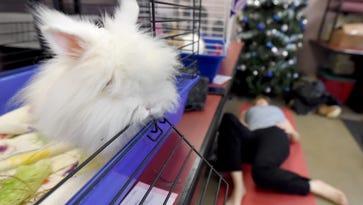 SPCA hosts bunny yoga to raise awareness