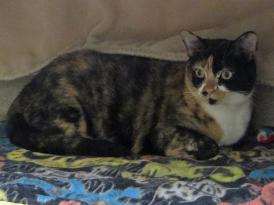 Tica is a real lap cat! Why not come on over to The Humane Society and meet her?