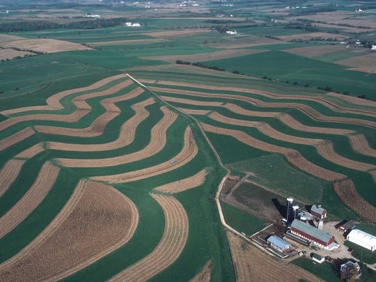 Contour strip cropping is a type of crop rotation that combines nearly equal-width strips of corn or soybeans planted on the contour of the land and alternated with strips of grasses or legumes.