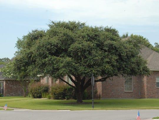 Trees improve property values by providing shade and