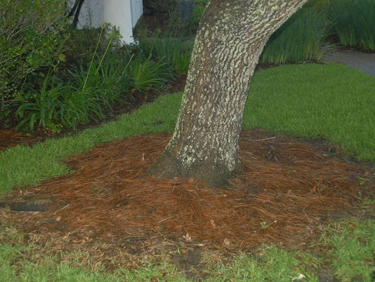 636344380305270826-mulch-replaces-ground-coverjpg.jpg