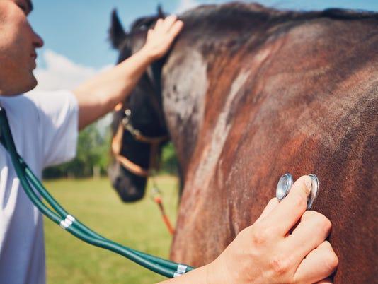 Veterinary medicine at farm