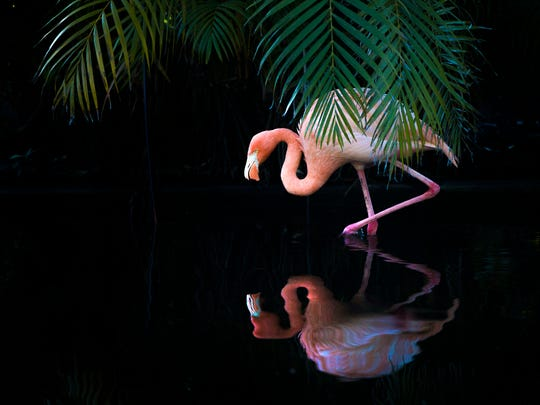 You can sip afternoon tea and feed flamingos at Everglades Wonder Gardens in Bonita Springs.