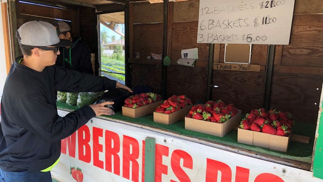 Conner Pedregon buys strawberries from a stand on Shirk Road and Hurley Avenue in Visalia.