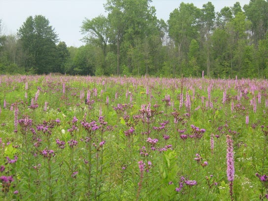 The Blazing Star Prairie Trail at Algonac State Park