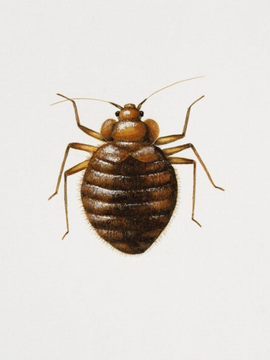 is your city crawling with bed bugs