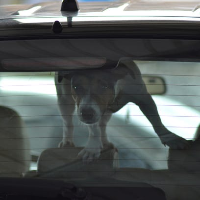 People could break into cars to save animals and not