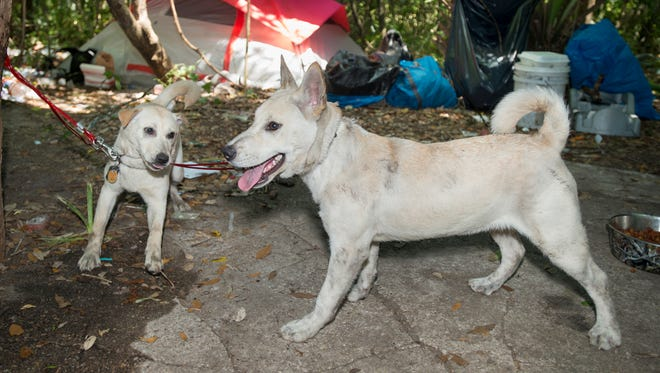 Dogs Layla, left, and Wesson are happy to be back with their owners at the homeless camp off Beggs Lane in Pensacola on Tuesday, May 1, 2018.   Multiple dogs were seized by the Escambia County Animal Control from the camp on Thursday, April 26th.