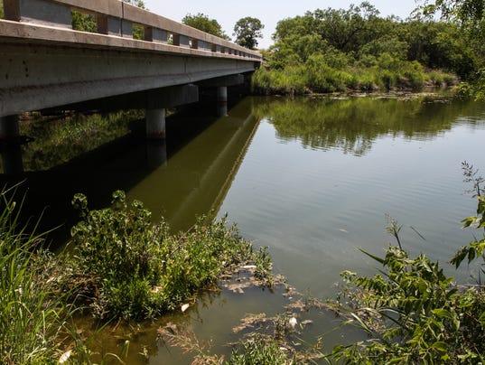 Dead fish in Concho River