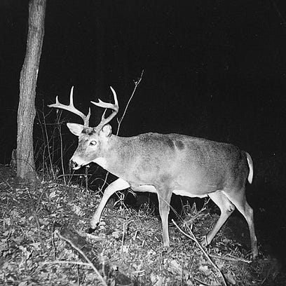 Wisconsin's Chippewa tribes are suing in federal court for the right to hunt deer at night.