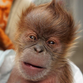 Como Zoo hosts baby shower