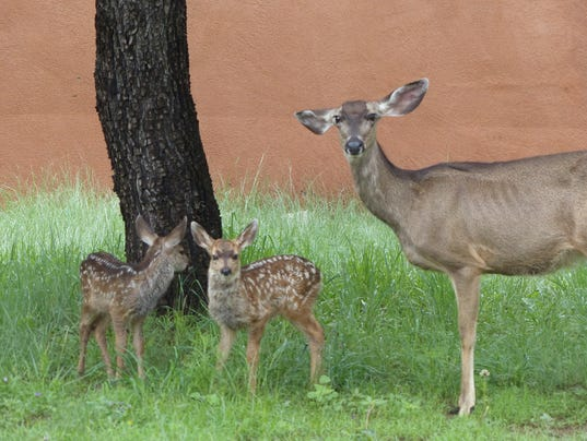 deer under tree wth fawns