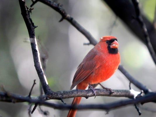 -BirdWatchCOV1_101711_wag0044.jpg_20111017.jpg
