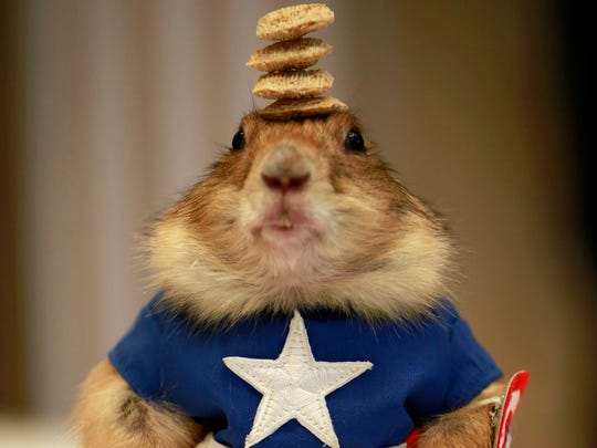 A Prairie dog wearing a costume of US superhero comic