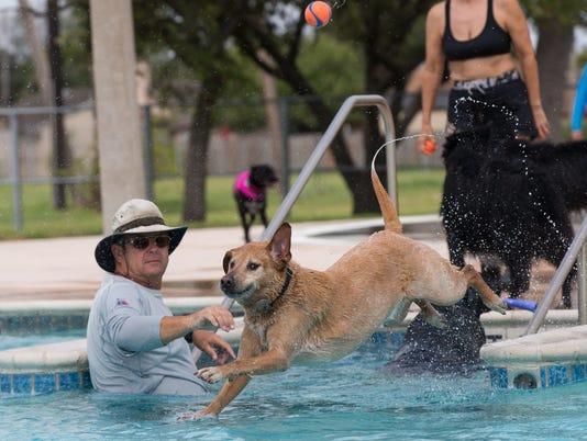 Doggy dip