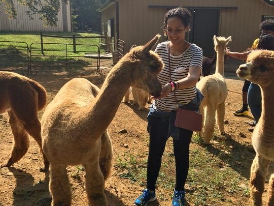 Meeting some of the alpacas at Highland Airs Alpaca Ranch in Hackettstown.