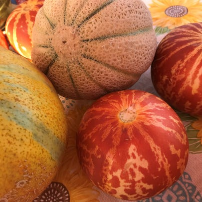 A variety of melons at the Abilene Farmers Market on