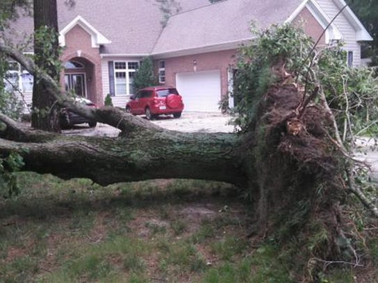 A maple tree was uprooted at the Salisbury home of