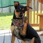 Tri-county Pets of the Week announced