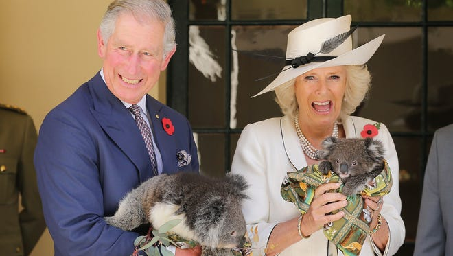 Not even the royals can resist the baby koalas on a royal trip to Australia.