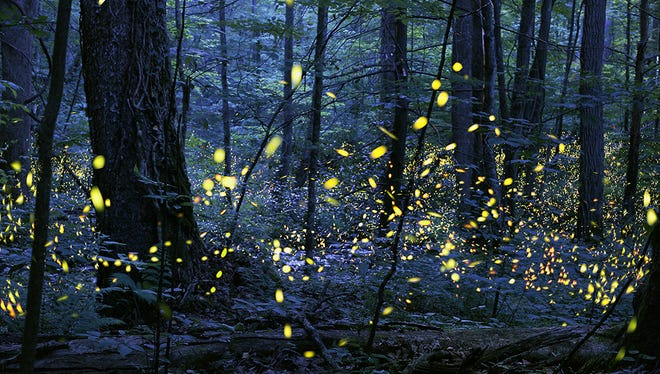 Great Smoky Mountains National Park has announced the dates for the Synchronous Firefly will be June 7-14.