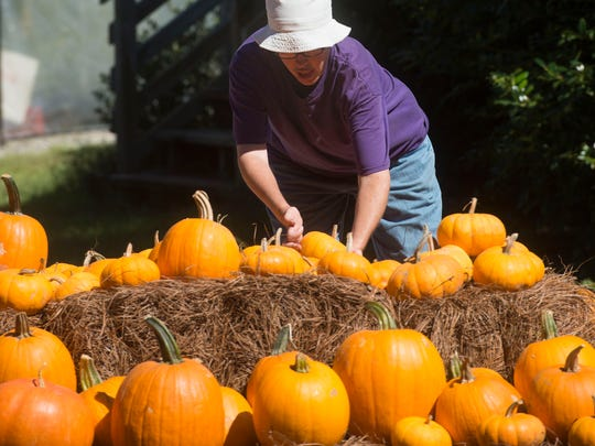 Barbara Collier sorts and creates a display of pumpkins for resale at the ARC Gateway Nursery on Fairfield Drive Monday afternoon.
