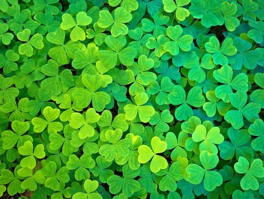 Celebrate St. Patrick's Day.