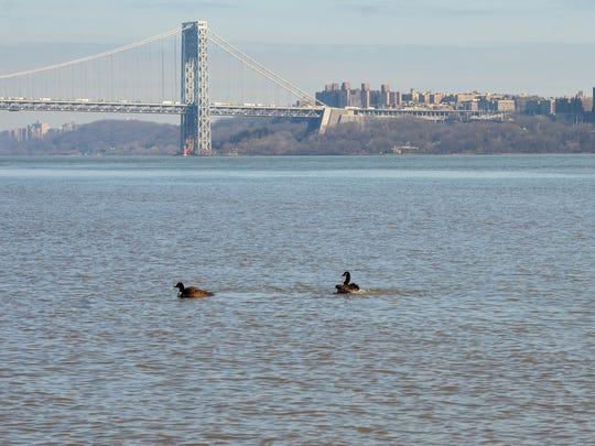 Fowl play in the Garden State: Geese in the Hudson