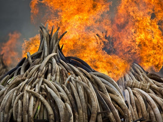 Pyres of ivory are set on fire in Kenya in 2017. A U.N. report paints the planet an increasing unhealthy place for people.