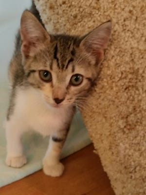 Isn't Rose the cutest little thing? Don't you want to take her home?