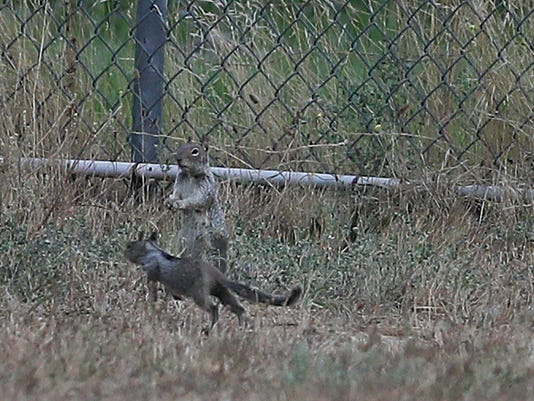 Squirrels2.jpg