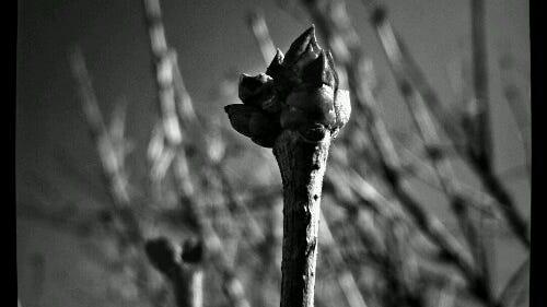 2012-02-03_10-24-08_605_snaptastic_5.jpg