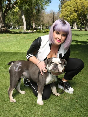 The temps are rising, but these dogs are nothing but cool. USA TODAY's Ann Oldenburg offers some fun pet products to keep your pooch looking and feeling good in summer. Kelly Osbourne's French Bulldog, Willy, has the mark of a celebrity with PetSmart's temporary Pet Expressions grooming stenciling. Prices start at $4, with 16 design options.