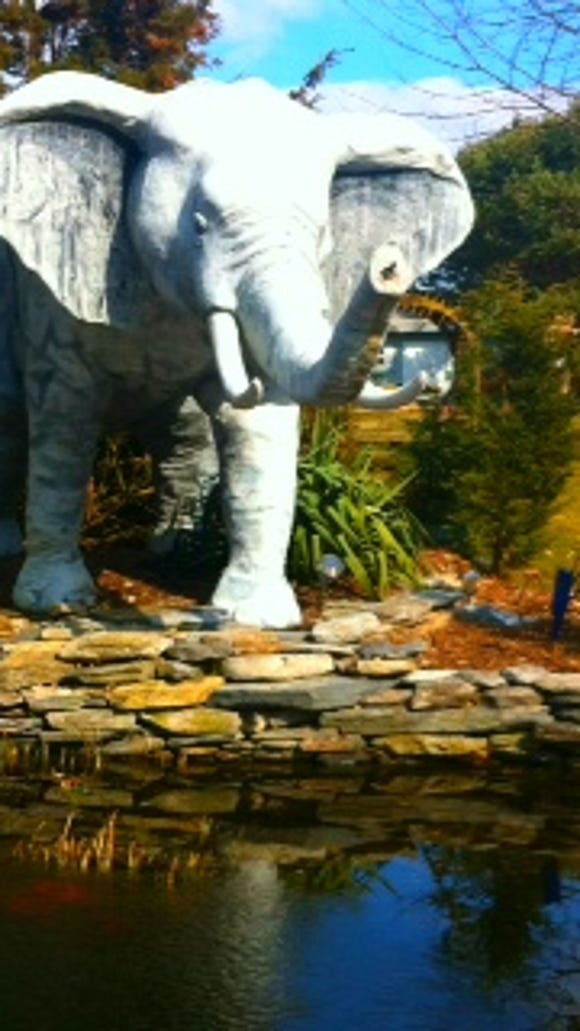 The elephant in the garden