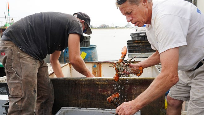 William Shaheen and Capt. John Makowsky remove fresh lobsters from their boat Intrepid this week at the Yankee Fishermen's Cooperative in Seabrook.