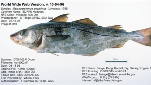 Haddock (Source: NOAA FishWatch.gov)