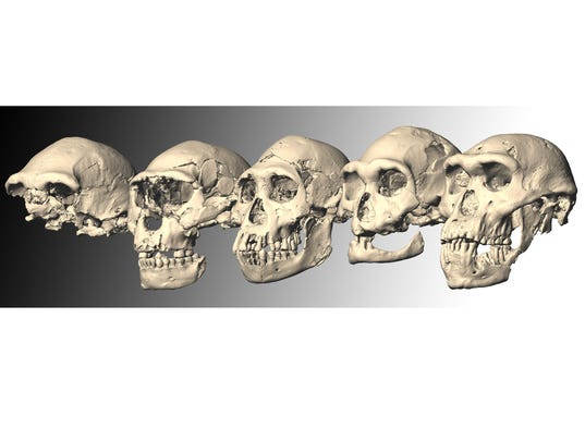 SkullsOnWhite