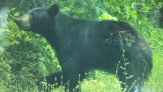 The bear was spotted Sunday morning in the Oakley area.