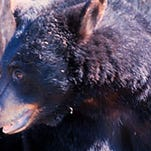 Securing pet food and garbage will help prevent attracting bears.