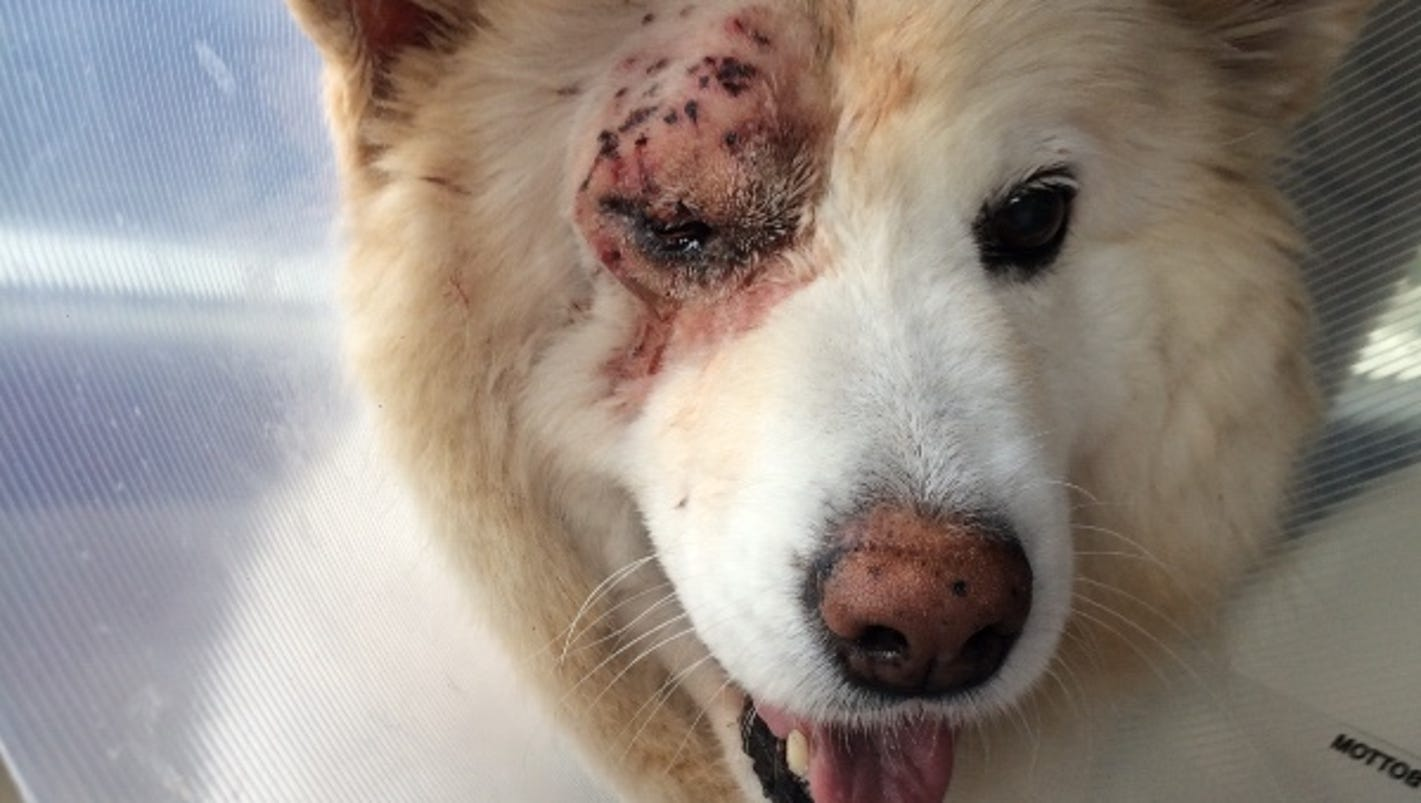Ucf Community Rallies For Dog Shot In Winter Park