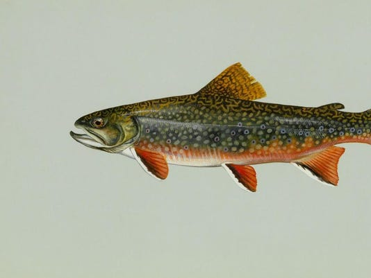 -Brook trout.jpg_20060804.jpg