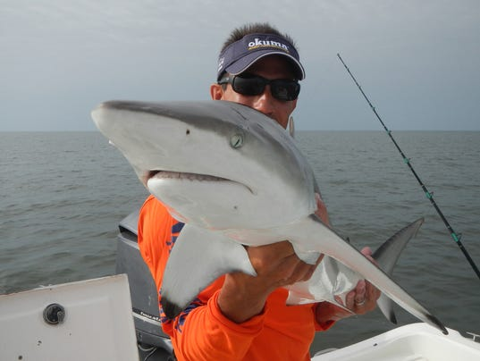 Rodeo sharks cause biggest controversy in 69 years for Deep sea fishing gulfport ms