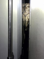 In this March 2017 photo provided by Will Sword, a barred owl is lodged between the cab and the cargo hold of a truck after it was hit and became trapped there while he was traveling earlier this month from Massachusetts to New Hampshire. The owl is being treated at a rehabilitation center in New Hampshire and is expected to recover. (Will Sword via AP)