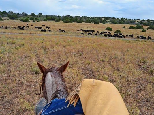 holding-herd.jpg