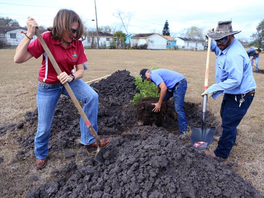 Stacie Anaya (from left), Jesse Balderaz and Roger De La Garza plant a mountain laurel at Cullen Park on Friday, Feb.y 17, 2016. A total of 37 trees consisting of cedar elms, Mexican white oak and anacua will be planted in the park. In addition to the 20 trees supplied by the city, AEP donated 17 trees. The city has a goal to plant 2017 this year.