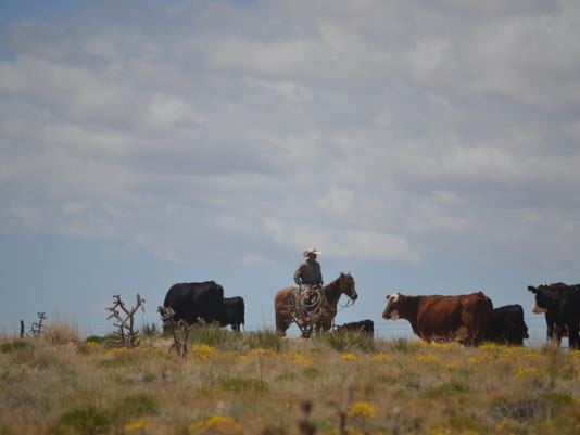 Working-Cattle.JPG