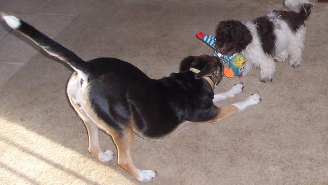 Bingo (right) and Sally have some canine fun.